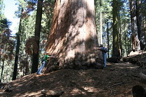 Kings Canyon & Sequoia National Parks
